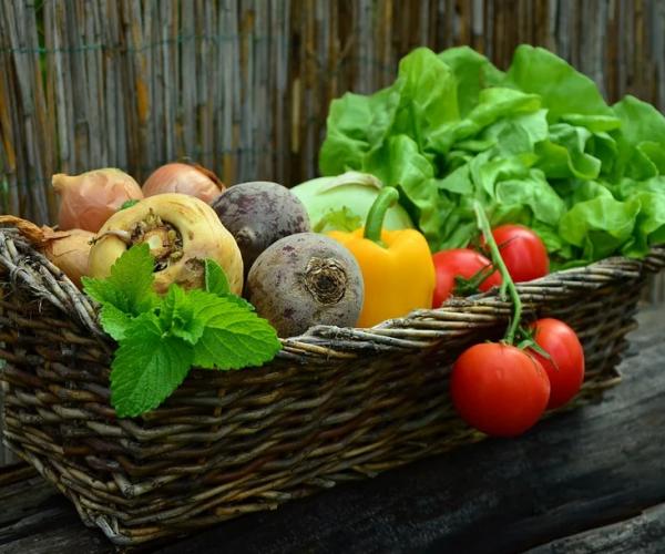 Wieviele gute Bakterien erhalten wir über unsere Ernährung?