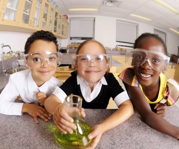 Was sind MikroVeda Mikroorganismen?