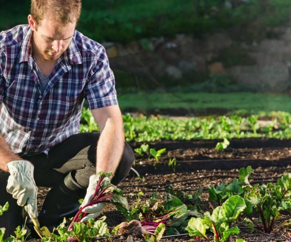 Gute Nachbarn, schlechte Nachbarn – Mischkulturen im Permakultur-Garten