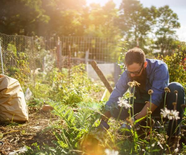 Einen Permakultur-Garten Schritt für Schritt anlegen