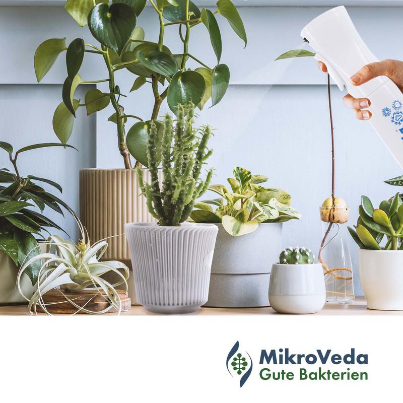 Spray your microbiome! Mikroorganismen einfach aufsprühen