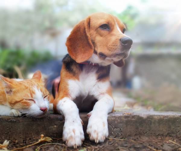Naturally support worming treatment in dogs and cats