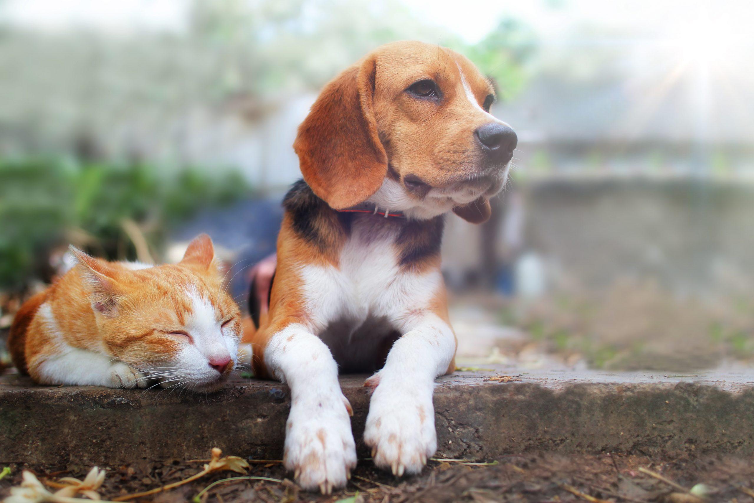 Wurmkuren bei Hund und Katze natürlich unterstützen