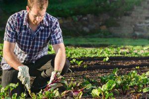 Gartenarbeit-Mischkulturen.jpg