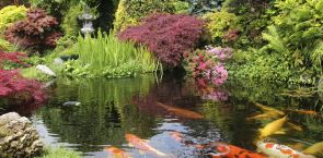 Teiche und Aquarien